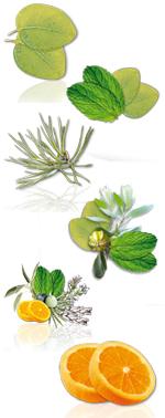 Aromes ,Fragrances à l'unité - 5 LITRES