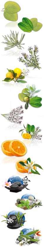 Aromes ,Fragrances à l'unité - 50 CL